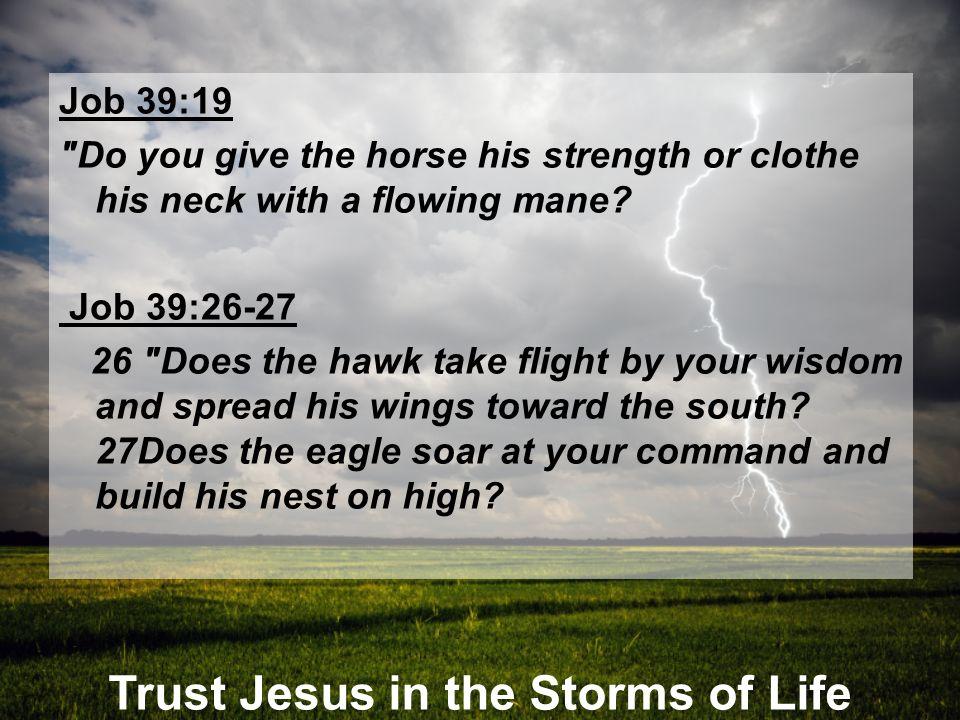 Trust Jesus in the Storms of Life Job 39:19
