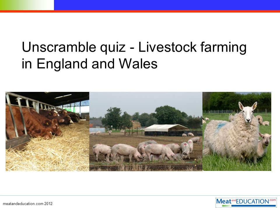 meatandeducation.com 2012 Unscramble quiz - Livestock farming in England and Wales