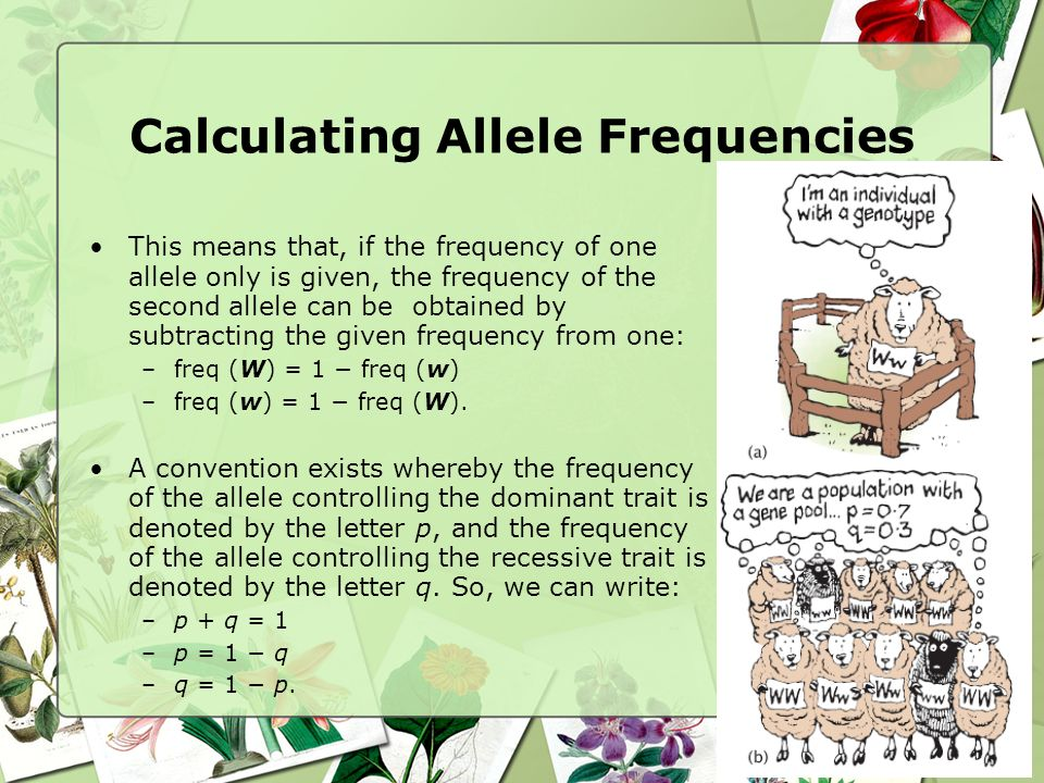 Calculating Allele Frequencies This means that, if the frequency of one allele only is given, the frequency of the second allele can be obtained by su