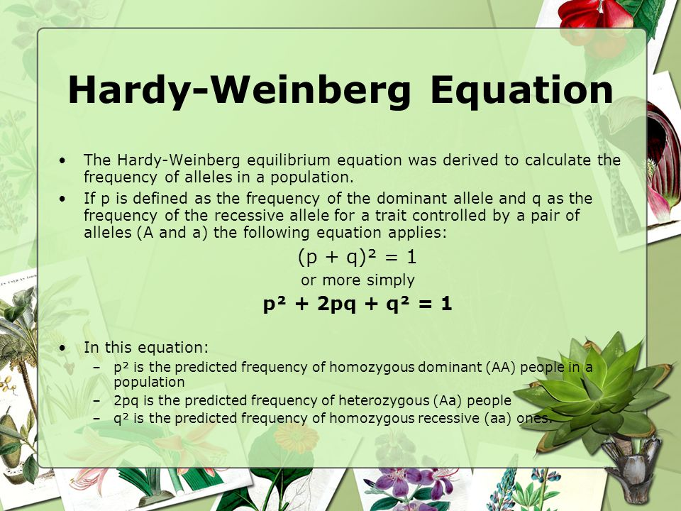 Hardy-Weinberg Equation The Hardy-Weinberg equilibrium equation was derived to calculate the frequency of alleles in a population. If p is defined as
