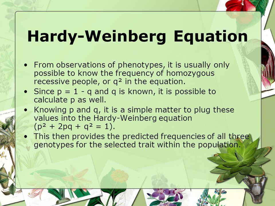 Hardy-Weinberg Equation From observations of phenotypes, it is usually only possible to know the frequency of homozygous recessive people, or q² in th