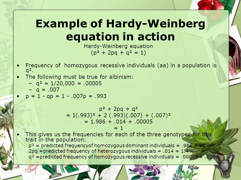 Example of Hardy-Weinberg equation in action Hardy-Weinberg equation (p² + 2pq + q² = 1) Frequency of homozygous recessive individuals (aa) in a popul