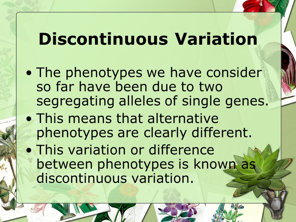 Discontinuous Variation The phenotypes we have consider so far have been due to two segregating alleles of single genes. This means that alternative p