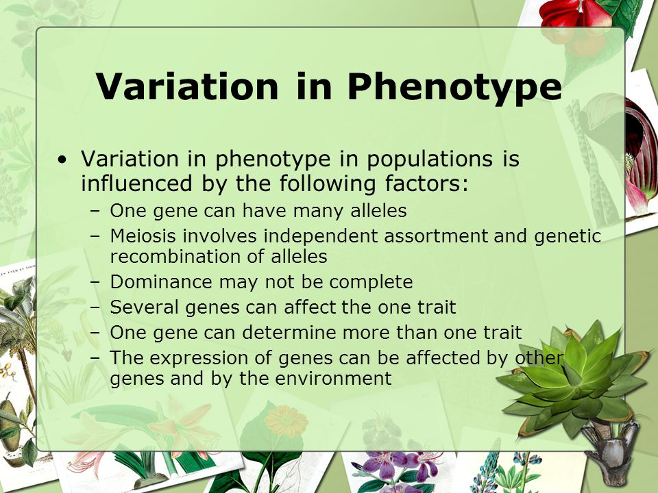 Variation in Phenotype Variation in phenotype in populations is influenced by the following factors: –One gene can have many alleles –Meiosis involves