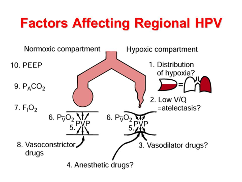 Factors Affecting Regional HPV