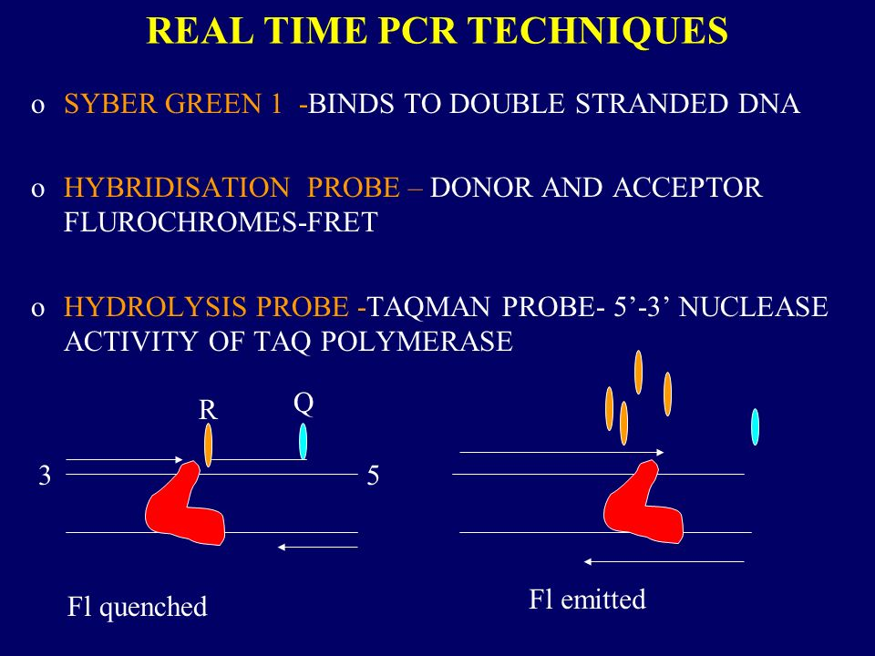 REAL TIME PCR TECHNIQUES oSYBER GREEN 1 -BINDS TO DOUBLE STRANDED DNA oHYBRIDISATION PROBE – DONOR AND ACCEPTOR FLUROCHROMES-FRET oHYDROLYSIS PROBE -TAQMAN PROBE- 5-3 NUCLEASE ACTIVITY OF TAQ POLYMERASE 35 R Q Fl quenched Fl emitted