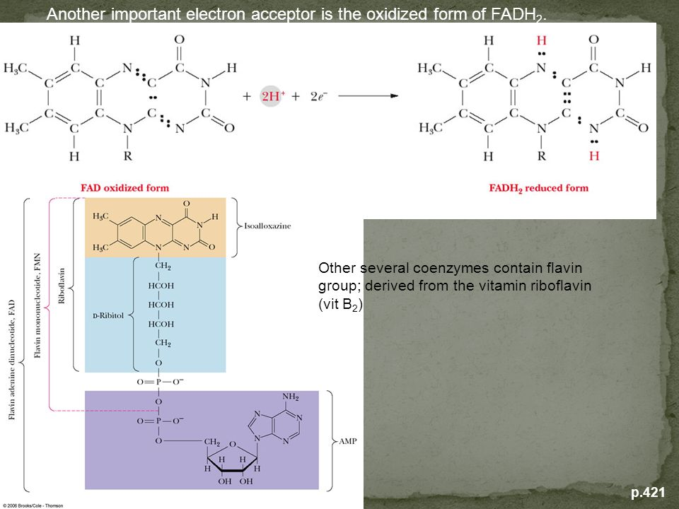p.421 Another important electron acceptor is the oxidized form of FADH 2. Other several coenzymes contain flavin group; derived from the vitamin ribof