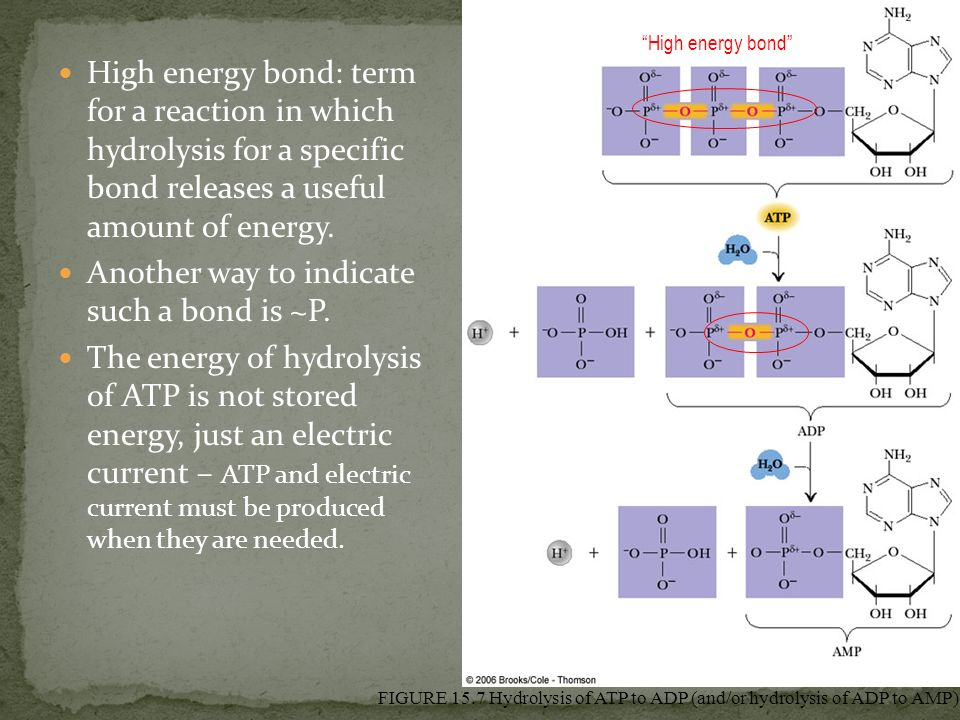 High energy bond: term for a reaction in which hydrolysis for a specific bond releases a useful amount of energy. Another way to indicate such a bond