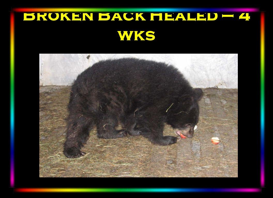 Broken Back Healed – 4 wks