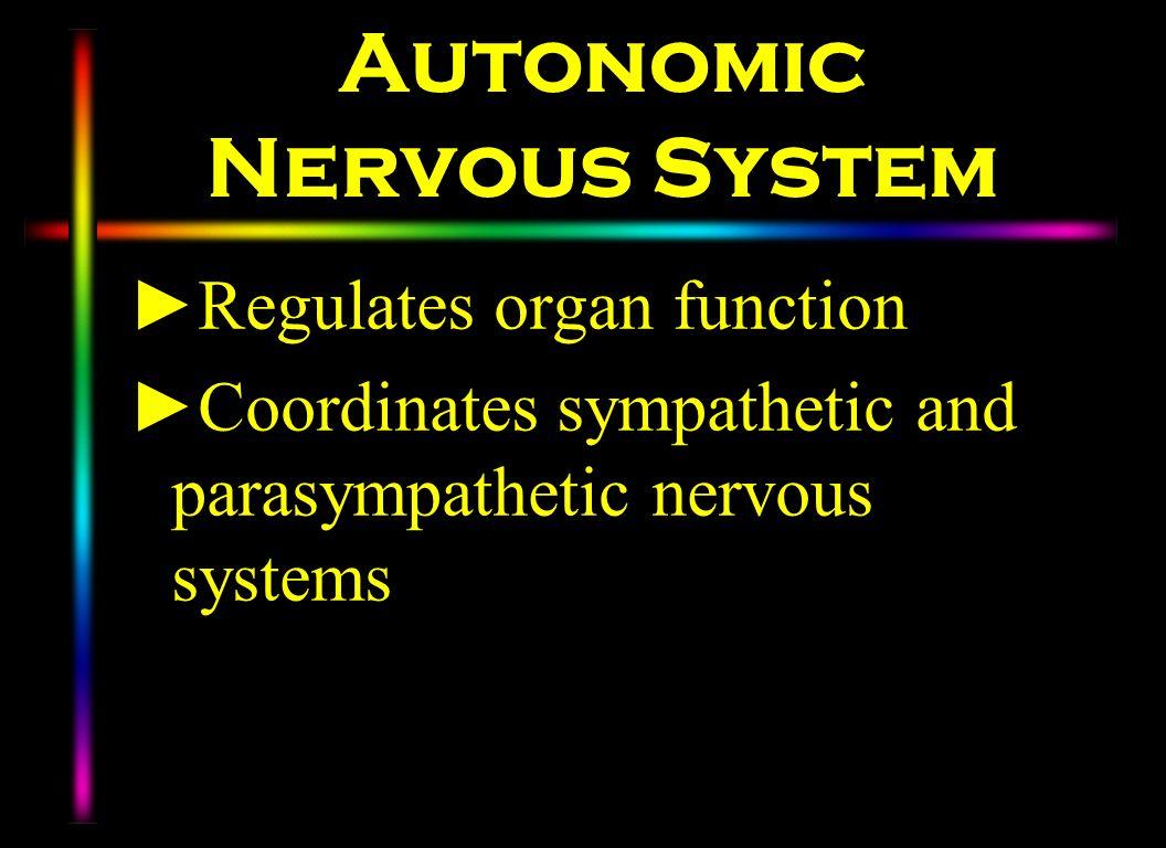 Autonomic Nervous System Regulates organ function Coordinates sympathetic and parasympathetic nervous systems