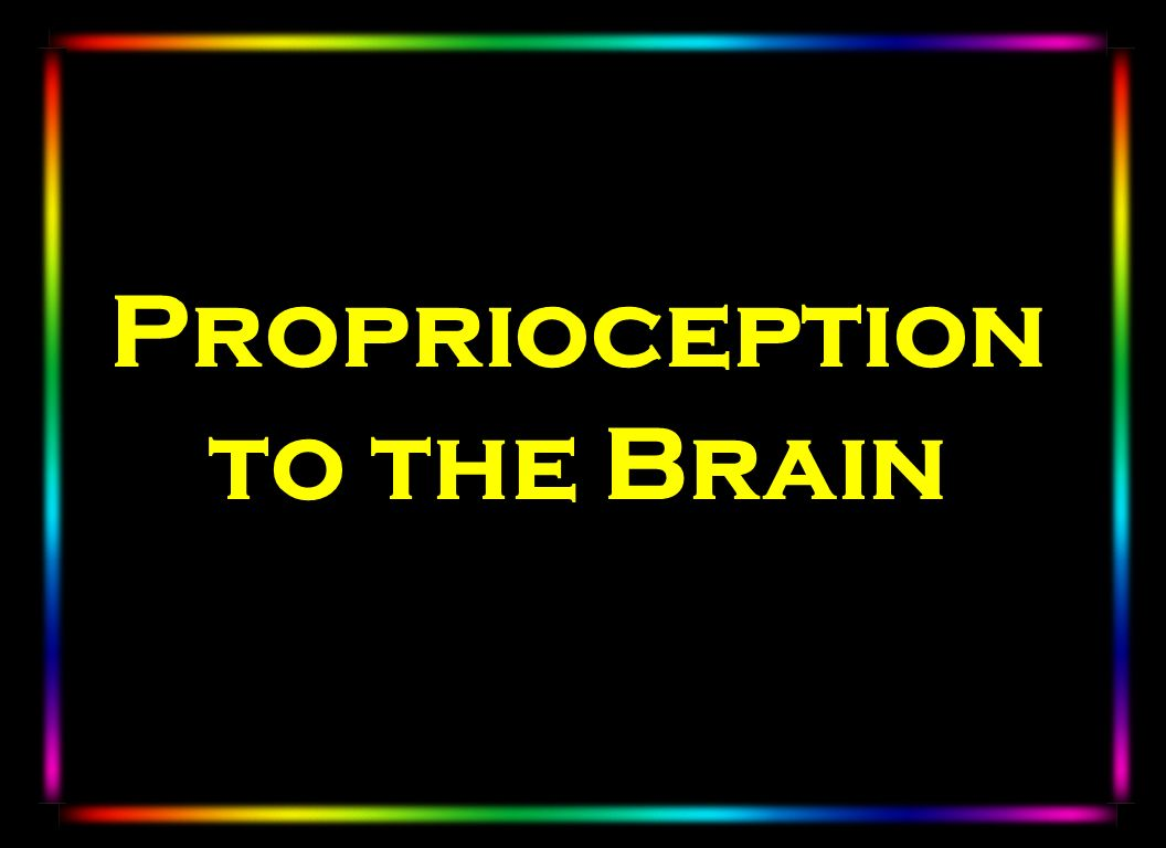 Proprioception to the Brain