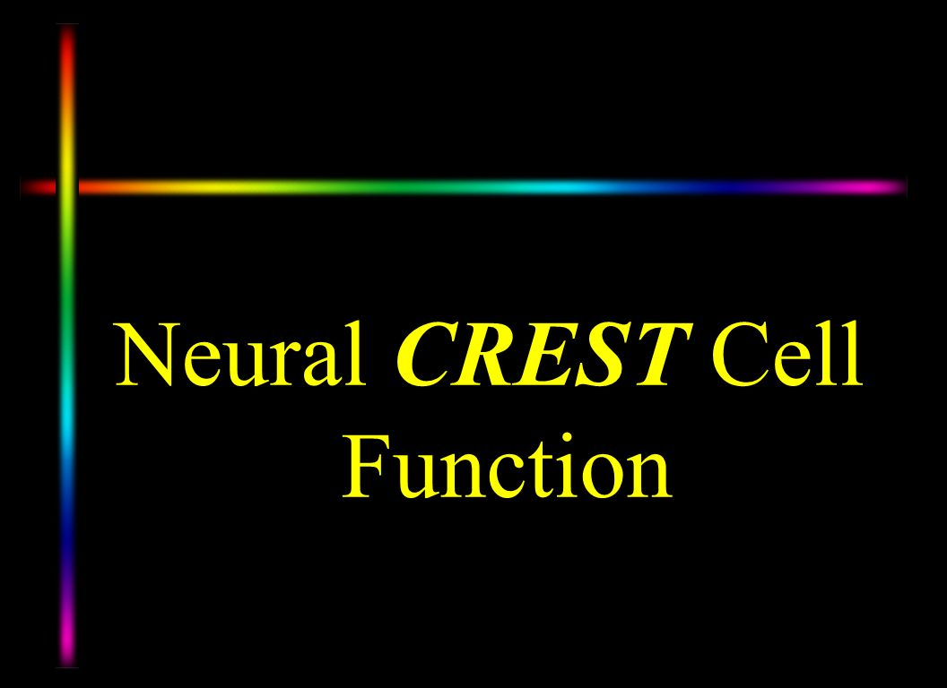 Neural CREST Cell Function