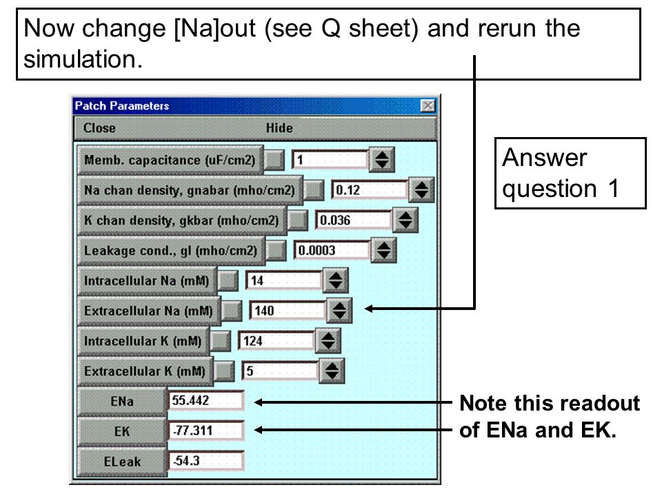 Now change [Na]out (see Q sheet) and rerun the simulation. Answer question 1 Note this readout of ENa and EK.
