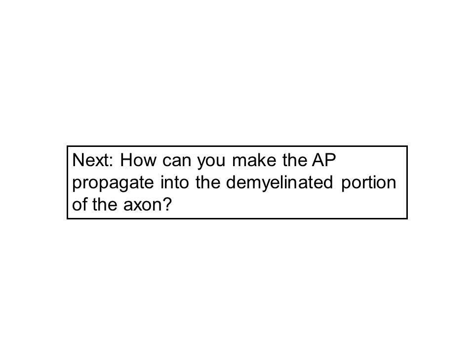 Next: How can you make the AP propagate into the demyelinated portion of the axon?