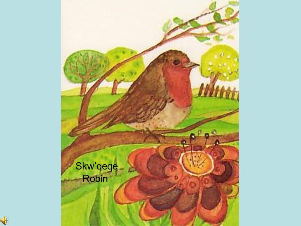 Sqwu lesh Bird