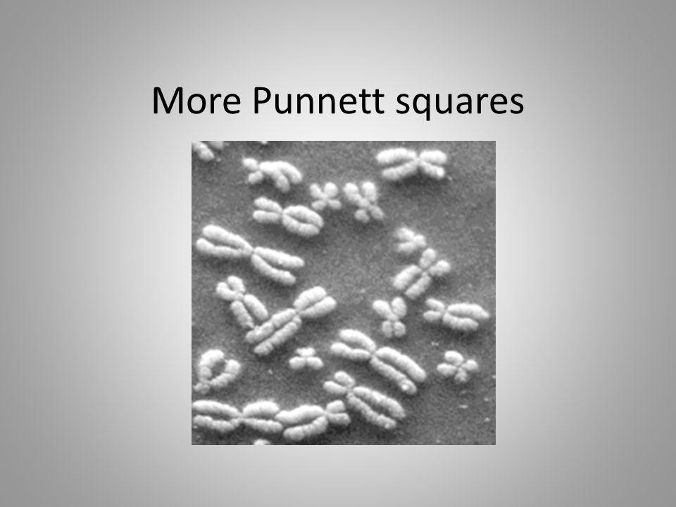 More Punnett squares