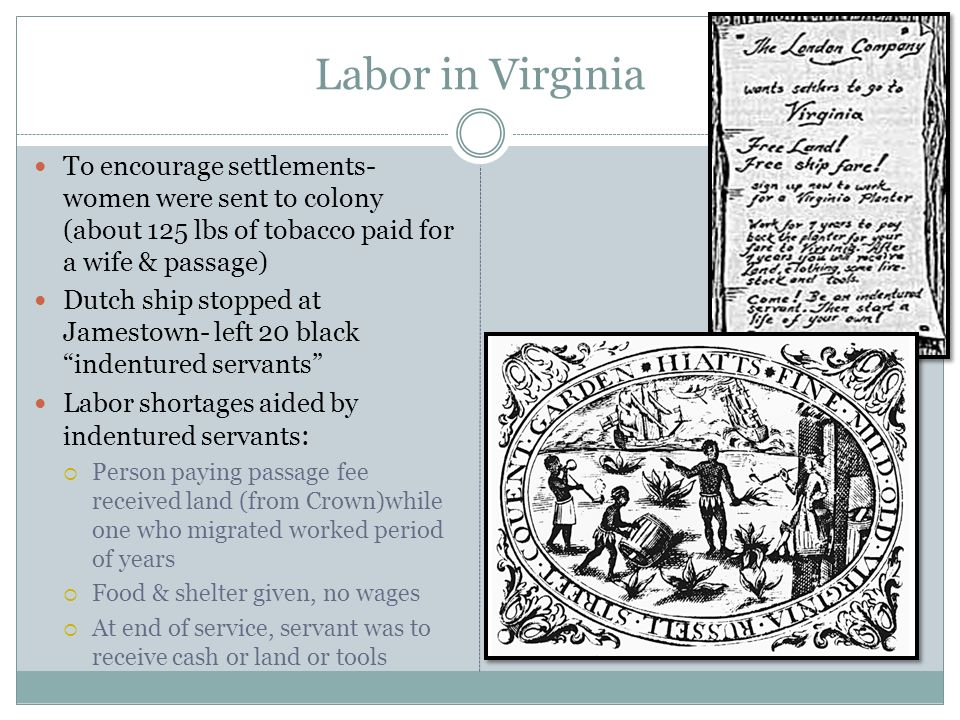 Labor in Virginia To encourage settlements- women were sent to colony (about 125 lbs of tobacco paid for a wife & passage) Dutch ship stopped at James