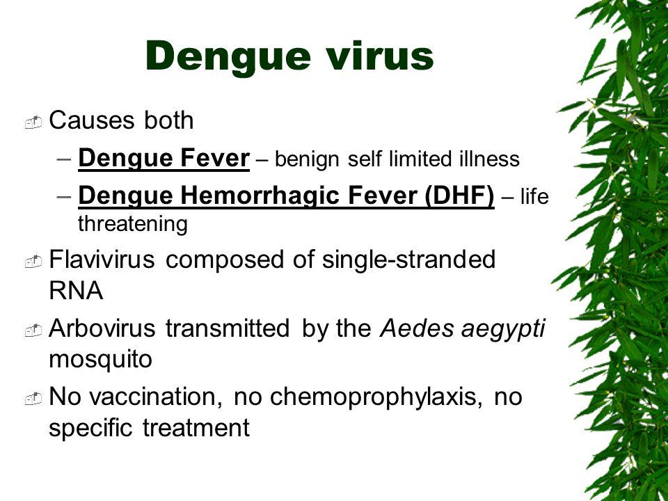 Dengue virus Causes both –Dengue Fever – benign self limited illness –Dengue Hemorrhagic Fever (DHF) – life threatening Flavivirus composed of single-