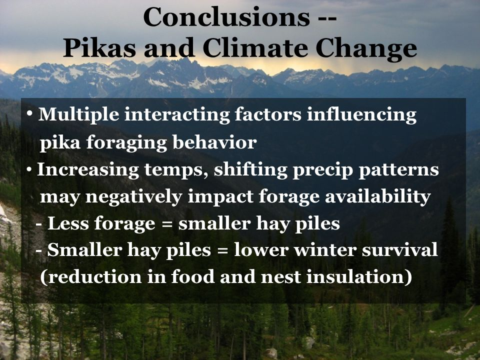 Conclusions -- Pikas and Climate Change Multiple interacting factors influencing pika foraging behavior Increasing temps, shifting precip patterns may negatively impact forage availability - Less forage = smaller hay piles - Smaller hay piles = lower winter survival (reduction in food and nest insulation)