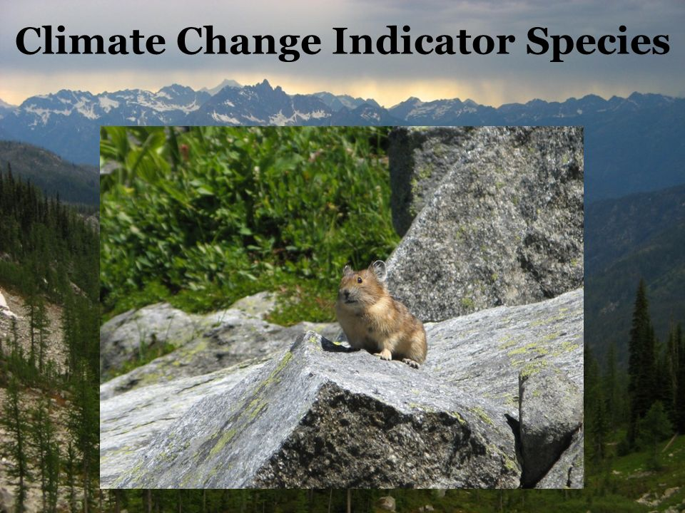 Climate Change Indicator Species
