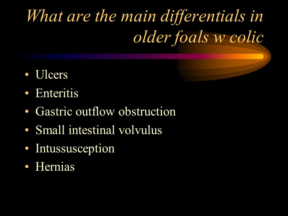 What are the main differentials in older foals w colic Ulcers Enteritis Gastric outflow obstruction Small intestinal volvulus Intussusception Hernias