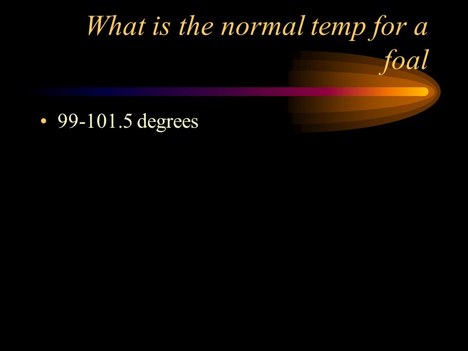 What is the normal temp for a foal 99-101.5 degrees