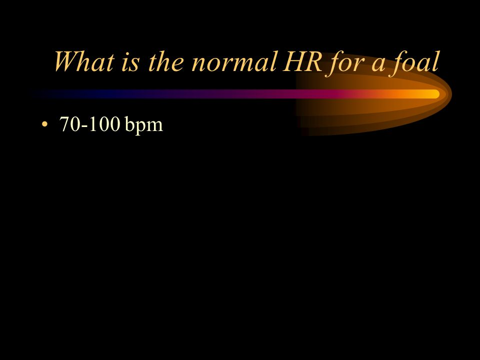 What is the normal HR for a foal 70-100 bpm