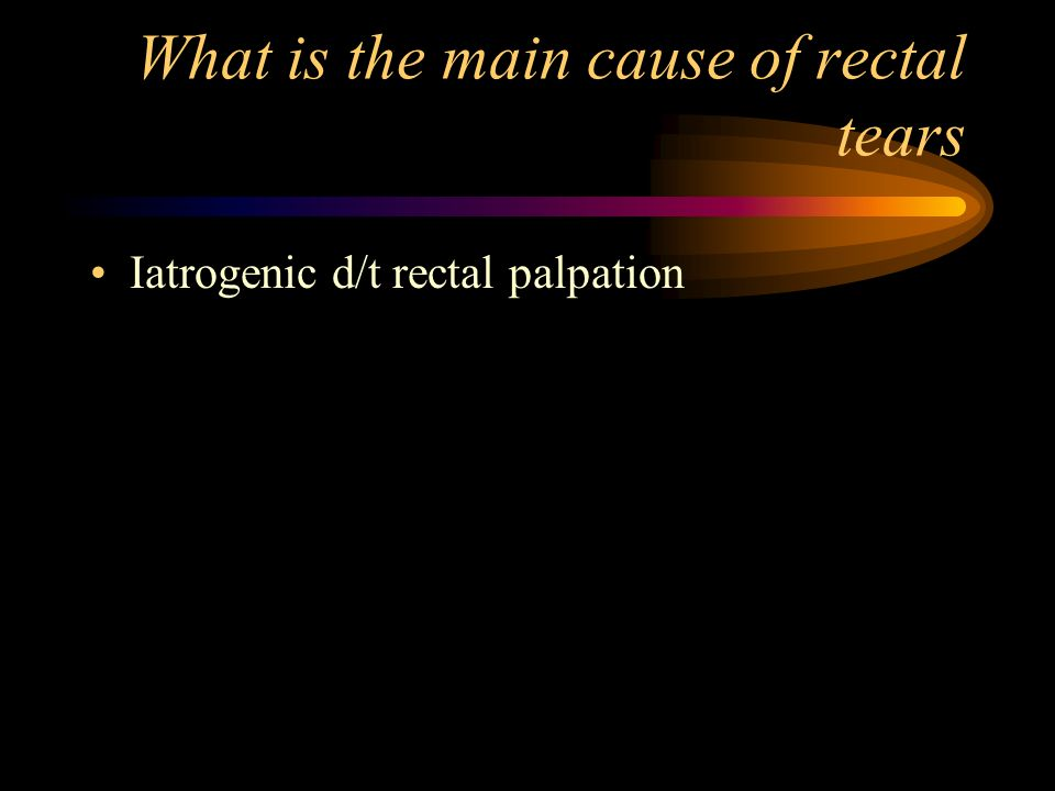 What is the main cause of rectal tears Iatrogenic d/t rectal palpation