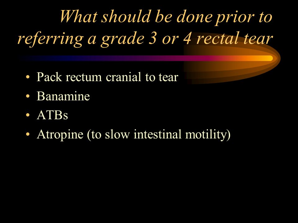 What should be done prior to referring a grade 3 or 4 rectal tear Pack rectum cranial to tear Banamine ATBs Atropine (to slow intestinal motility)
