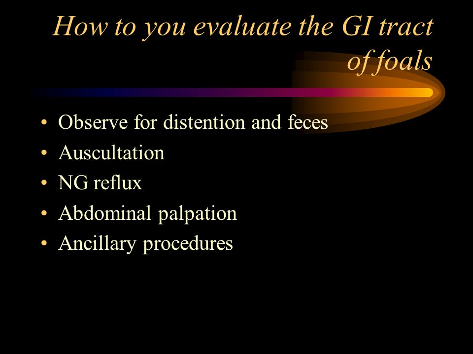 How to you evaluate the GI tract of foals Observe for distention and feces Auscultation NG reflux Abdominal palpation Ancillary procedures