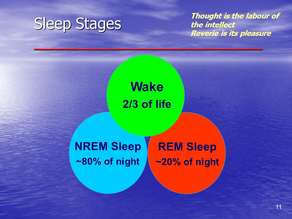 11 REM Sleep ~20% of night NREM Sleep ~80% of night Wake 2/3 of life Sleep Stages ___________________________ Thought is the labour of the intellect R