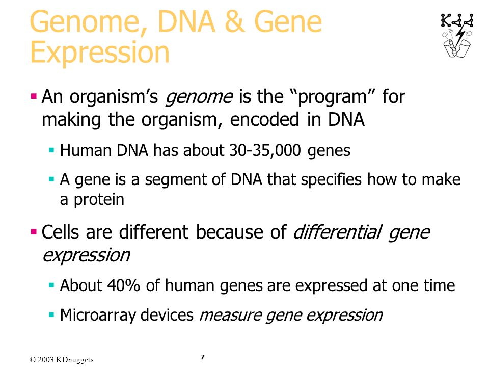 © 2003 KDnuggets 7 Genome, DNA & Gene Expression An organisms genome is the program for making the organism, encoded in DNA Human DNA has about 30-35,