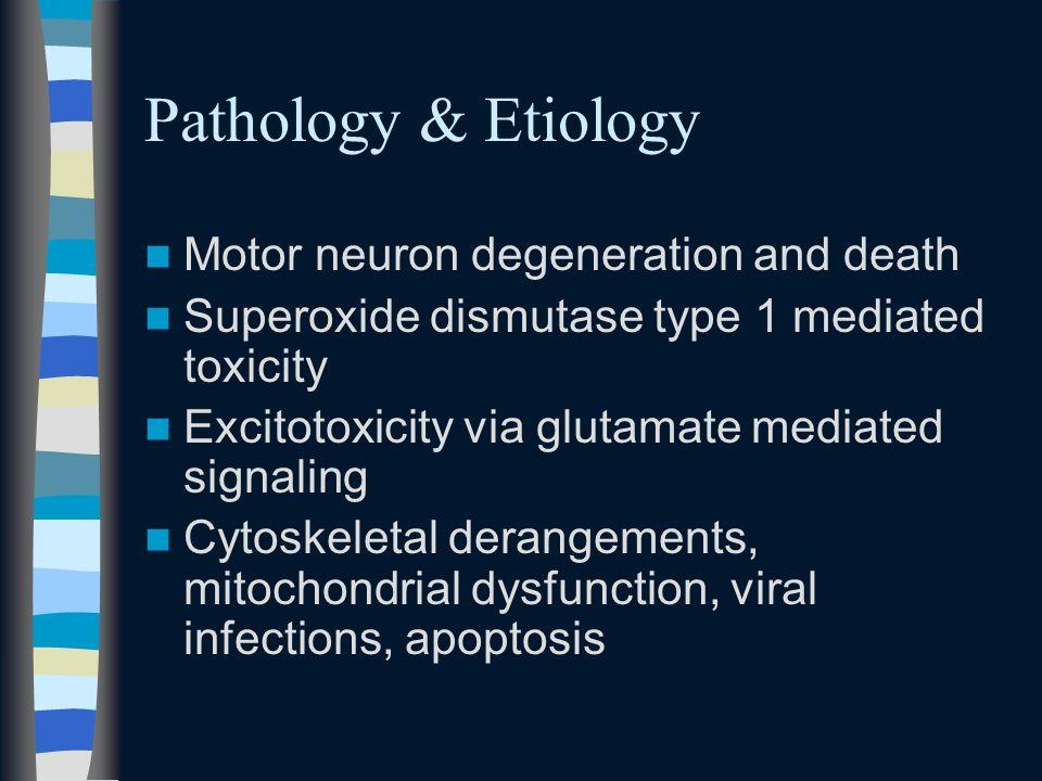 Pathology & Etiology Motor neuron degeneration and death Superoxide dismutase type 1 mediated toxicity Excitotoxicity via glutamate mediated signaling