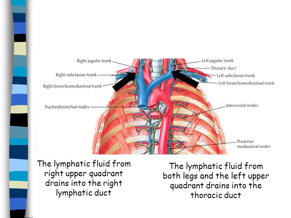 The lymphatic fluid from right upper quadrant drains into the right lymphatic duct The lymphatic fluid from both legs and the left upper quadrant drai