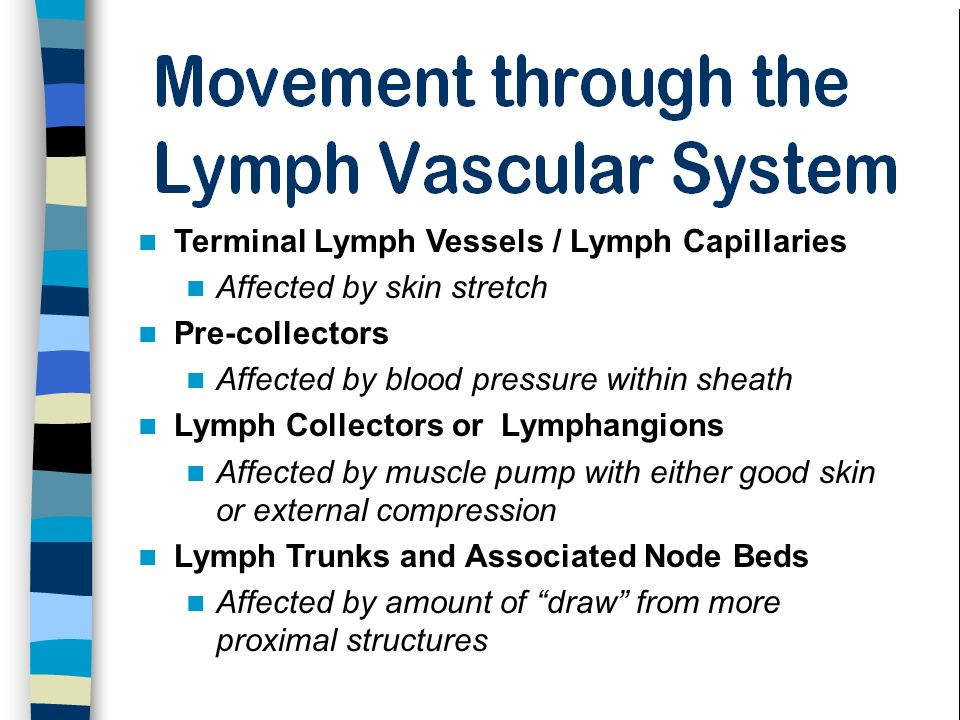 Terminal Lymph Vessels / Lymph Capillaries Affected by skin stretch Pre-collectors Affected by blood pressure within sheath Lymph Collectors or Lympha