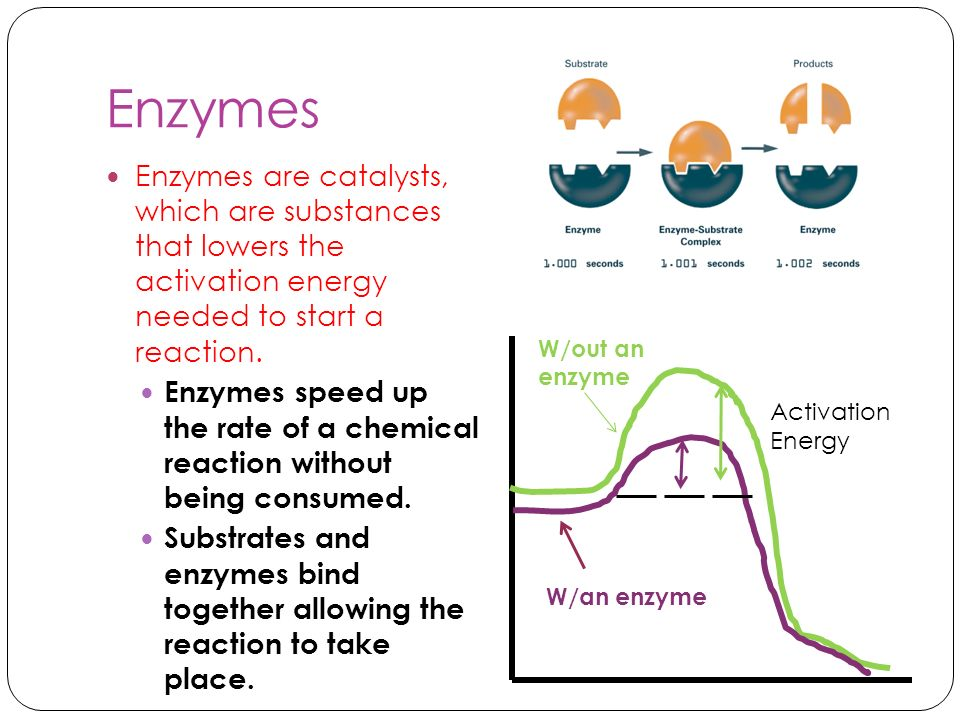Enzymes Enzymes are catalysts, which are substances that lowers the activation energy needed to start a reaction. Enzymes speed up the rate of a chemi