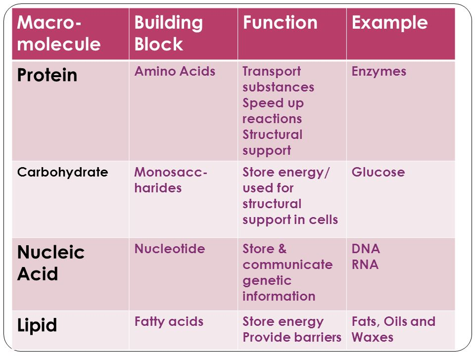 Macro- molecule Building Block FunctionExample Protein Amino AcidsTransport substances Speed up reactions Structural support Enzymes CarbohydrateMonos