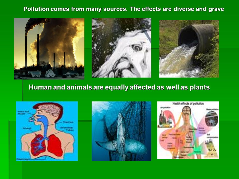Pollution comes from many sources. The effects are diverse and grave Pollution comes from many sources. The effects are diverse and grave Human and an
