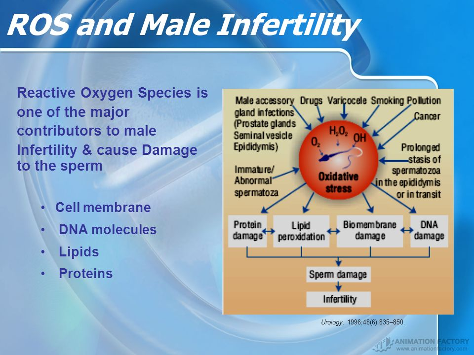 ROS and Male Infertility Reactive Oxygen Species is one of the major contributors to male Infertility & cause Damage to the sperm Cell membrane DNA molecules Lipids Proteins Urology.