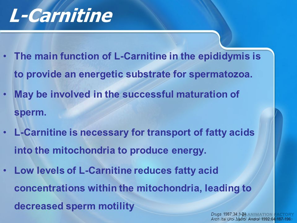 L-Carnitine The main function of L-Carnitine in the epididymis is to provide an energetic substrate for spermatozoa.