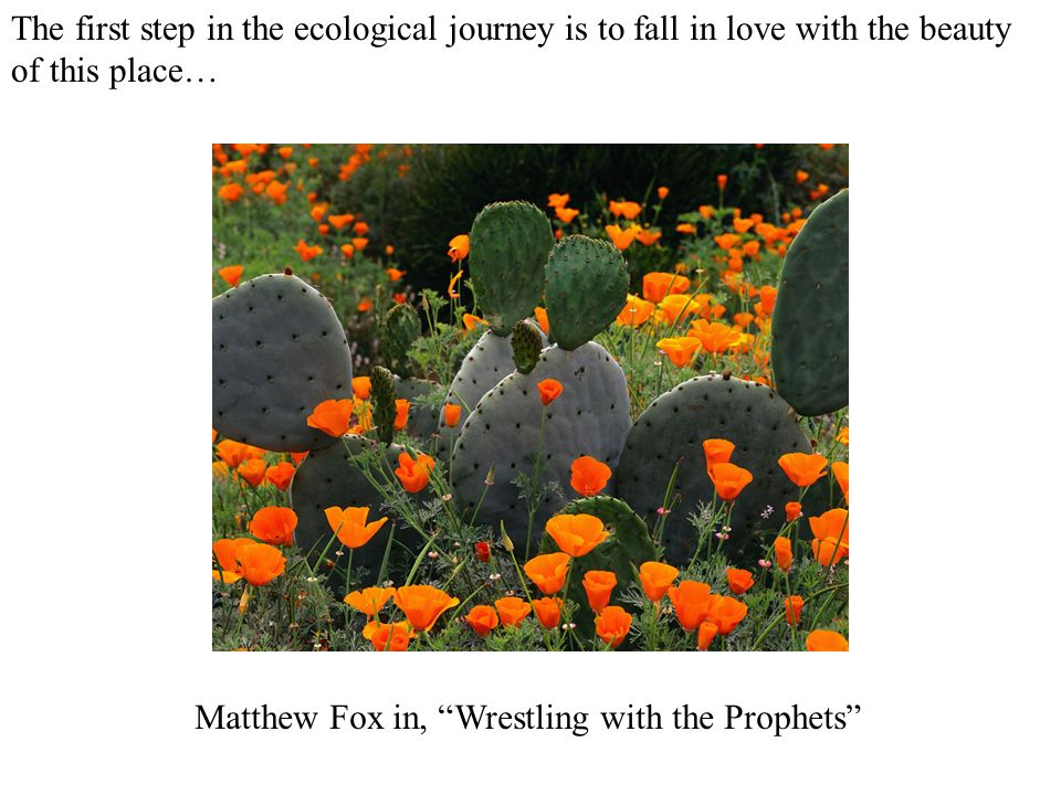 The first step in the ecological journey is to fall in love with the beauty of this place… Matthew Fox in, Wrestling with the Prophets
