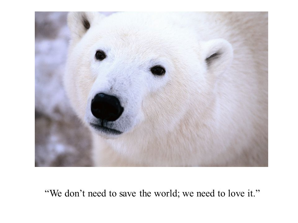 We dont need to save the world; we need to love it.