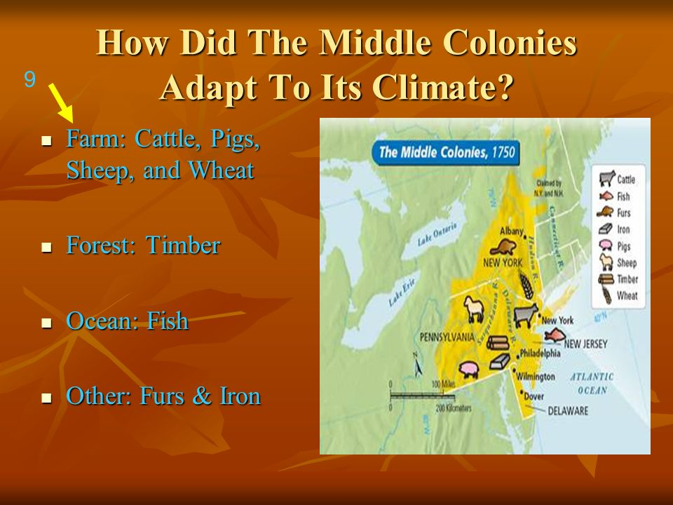 How Did The Middle Colonies Adapt To Its Climate? Farm: Cattle, Pigs, Sheep, and Wheat Farm: Cattle, Pigs, Sheep, and Wheat Forest: Timber Forest: Tim