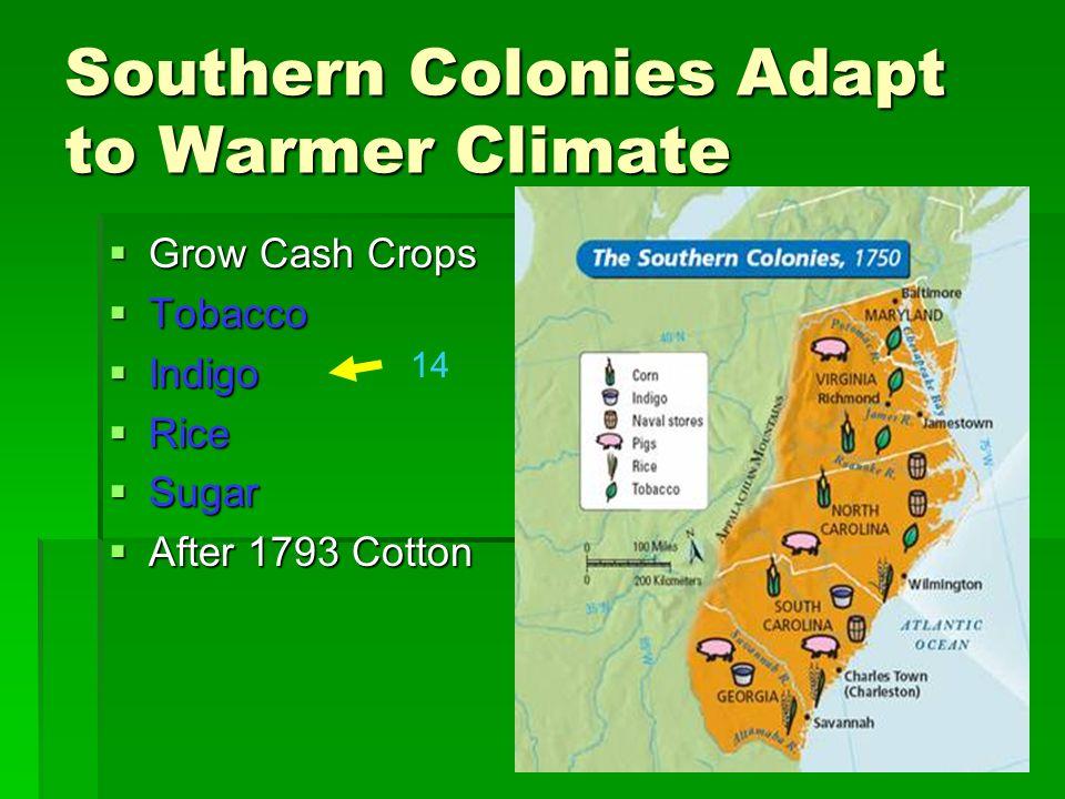 Southern Colonies Adapt to Warmer Climate Grow Cash Crops Grow Cash Crops Tobacco Tobacco Indigo Indigo Rice Rice Sugar Sugar After 1793 Cotton After