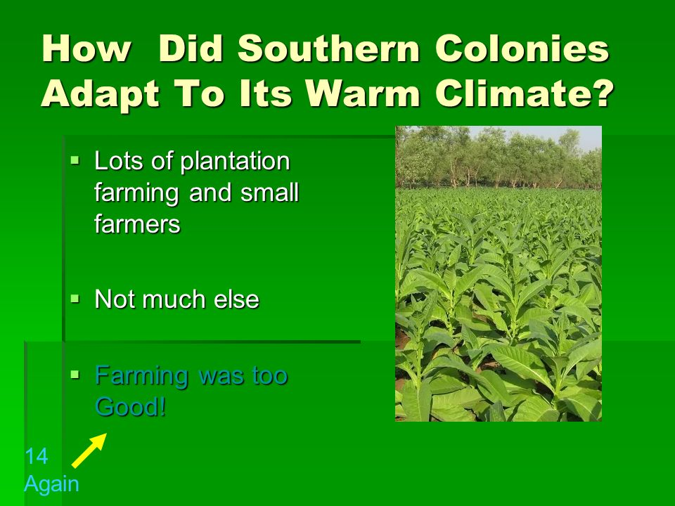 How Did Southern Colonies Adapt To Its Warm Climate? Lots of plantation farming and small farmers Lots of plantation farming and small farmers Not muc