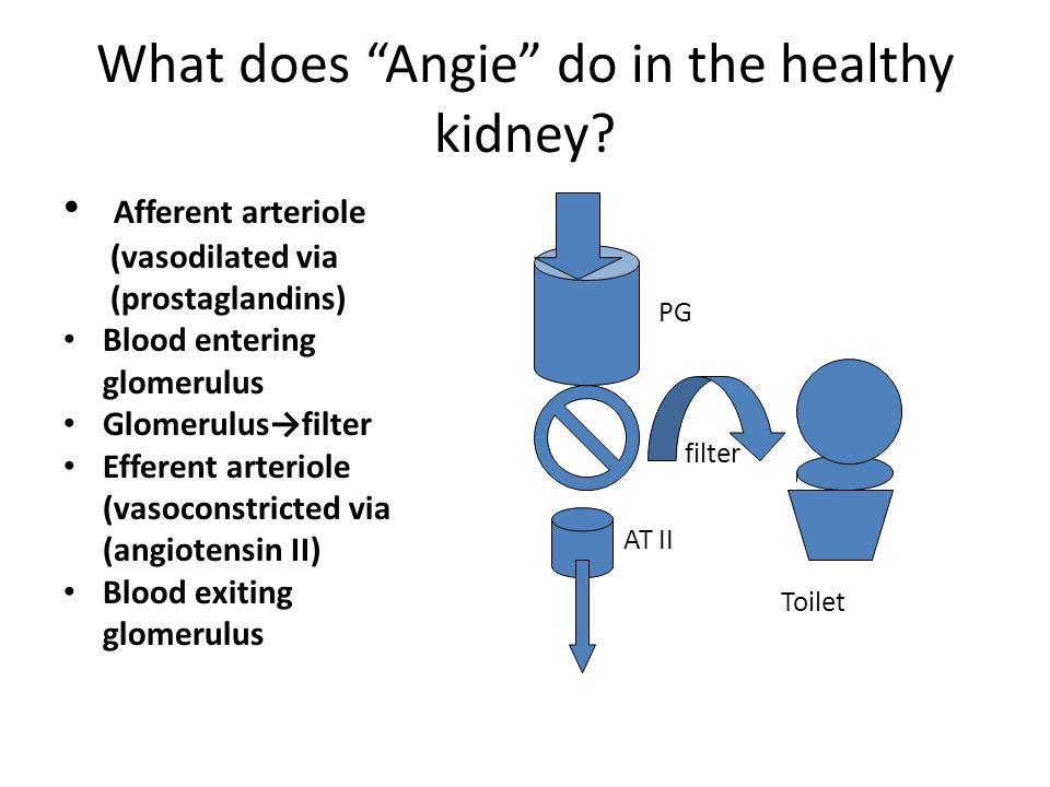 What does Angie do in the healthy kidney? Afferent arteriole (vasodilated via (prostaglandins) Blood entering glomerulus Glomerulusfilter Efferent art