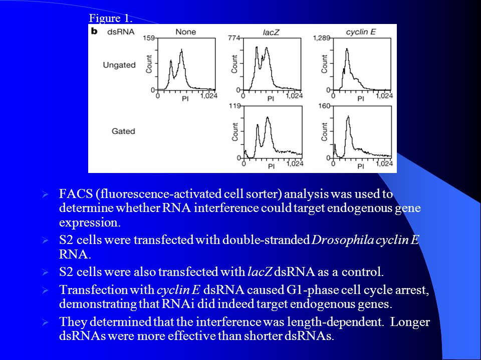 They demonstrated that a common characteristic of RNAi is the reduction of endogenous mRNA levels that are homologous to the dsRNA transfected into the cells.