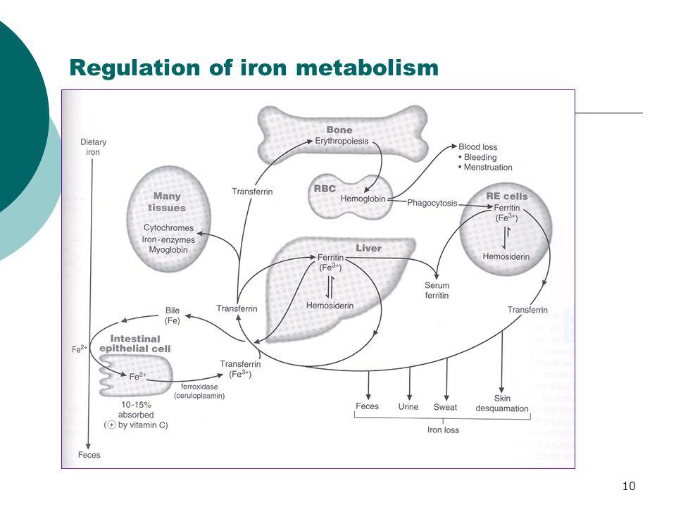 10 Regulation of iron metabolism