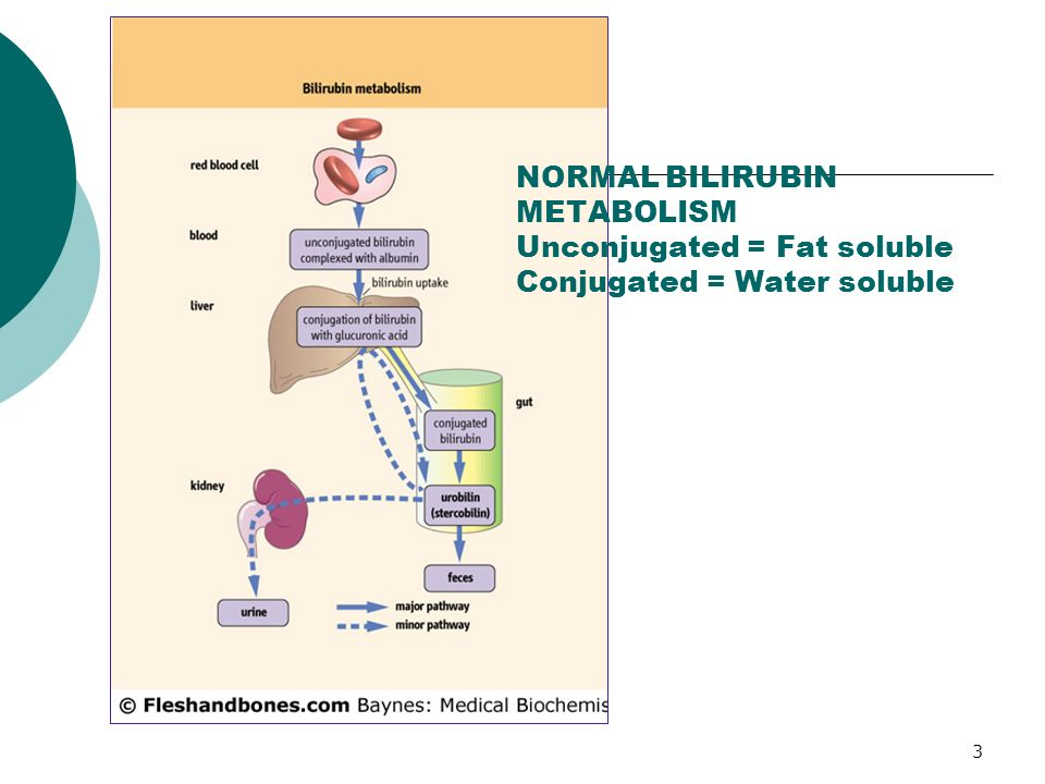 3 NORMAL BILIRUBIN METABOLISM Unconjugated = Fat soluble Conjugated = Water soluble