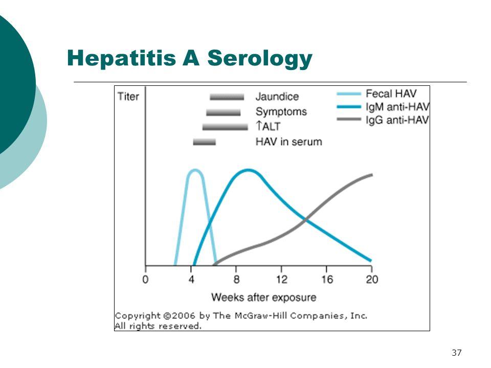 37 Hepatitis A Serology